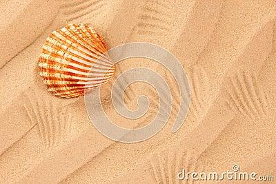 Arena de la playa con el shell