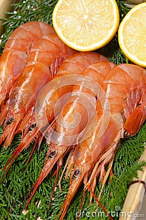 Argentine red shrimp