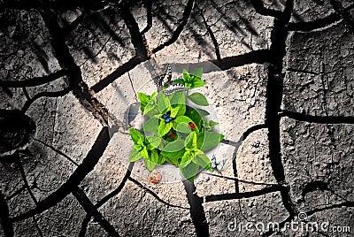 Arid ground and green