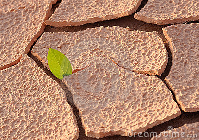 On an arid land leaf