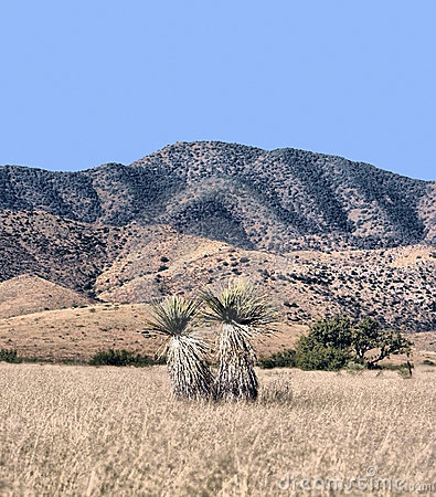 Arid landscape and mountains