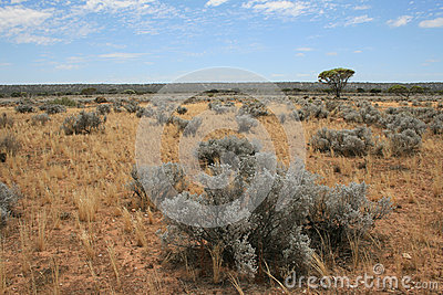 The arid Nullarbor