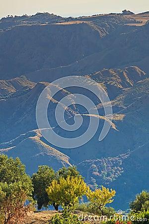 Arid olive hills