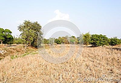 Arid paddy field