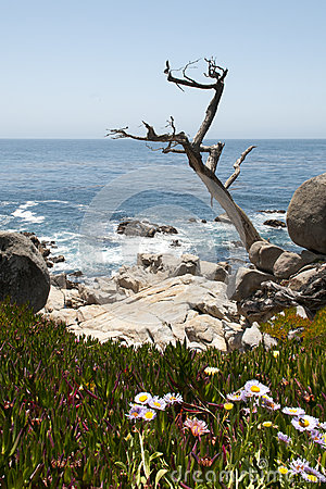 Arid tree looms out to the ocean