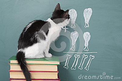 educated cat - photo #19