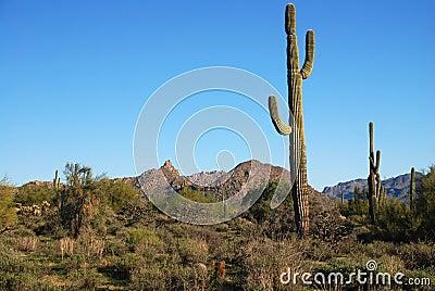 Arizona desert terrain.