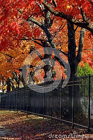 Free Arkansas Autumn In Rogers Stock Image - 15210151