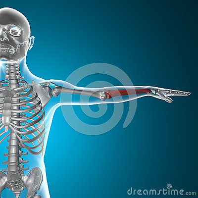 Arm bone x-ray human body