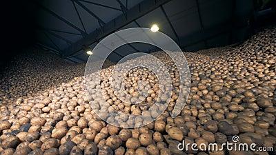 Armazenamento grande da batata, vista inferior Pilhas das batatas em um armazém vídeos de arquivo