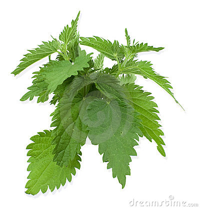Free Armful Of A Green Nettle Royalty Free Stock Image - 14983146