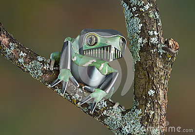 Armored Frog