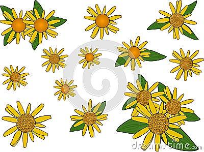 Arnica flowers.