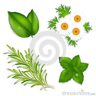 Aroma Herbs. Vector