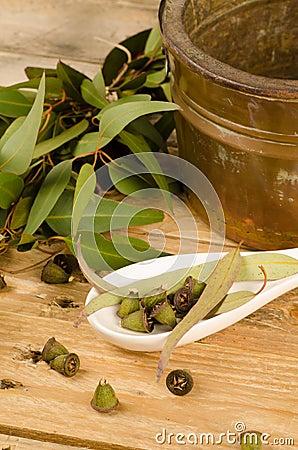 Aromatic eucalyptus
