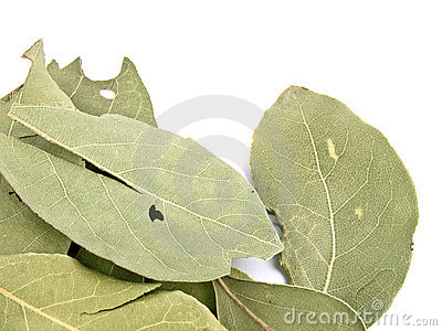 Aromatic laurel leafs