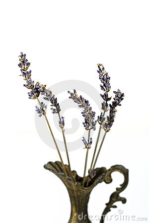 Aromatic lavender stems in a vintage vase