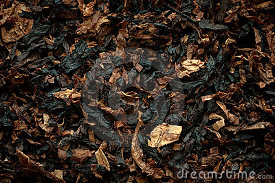 Aromatic pipe tobacco background.