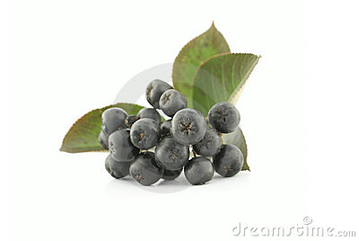 Aronia - Black Chokeberry.