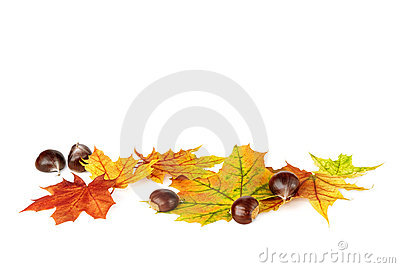 Arranged fallen down leaves and chestnuts on white