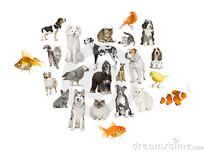 Arrangement of 22 domestic animals