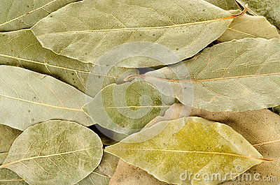 Arrangement of bay leaves