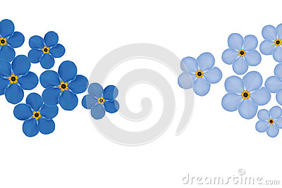 Arrangement of blue forget-me-not flowers isolated