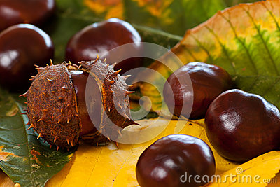 Arrangement of Chestnuts