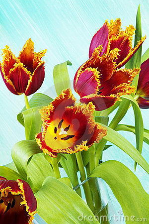 Arrangement of parrot tulips,