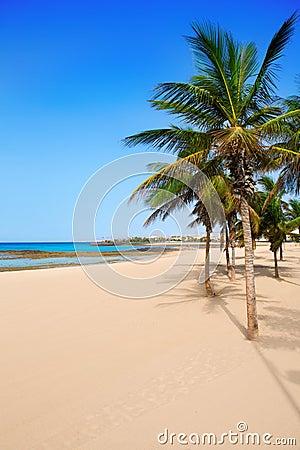 Arrecife Lanzarote Playa Reducto plaży drzewka palmowe