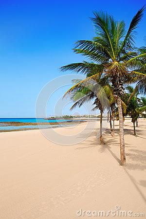 Arrecife Lanzarote Playa Reducto strandpalmträd