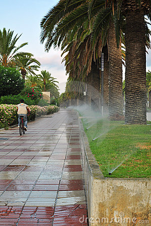 Arrosage de la ruelle de palmier