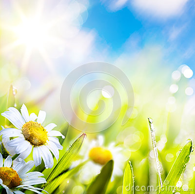 Free Art Abstract Background Springr Flower In Grass On Sun Sky Royalty Free Stock Photo - 29226515