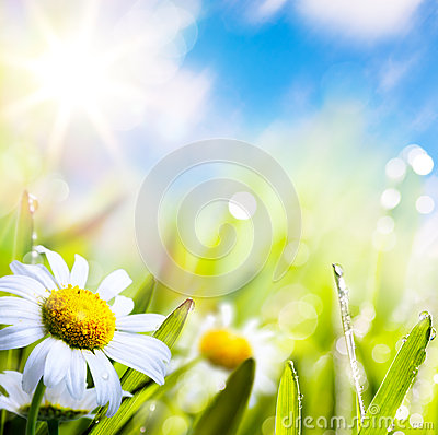 Art abstract background summer flowers in grass