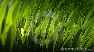 Art Background leaves green
