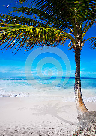 Art beautiful  caribbean tropical sea beach