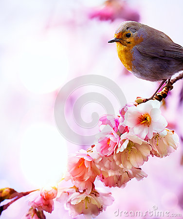 Free Art Beautiful Spring Morning Nature Background Stock Image - 37471951