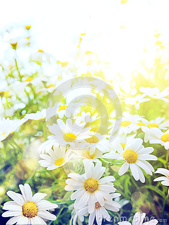 Free Art Bright Summer Flowers Natural Background Royalty Free Stock Image - 41685776