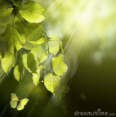 Free Art Butterfly On Spring Leaves Royalty Free Stock Image - 18440776