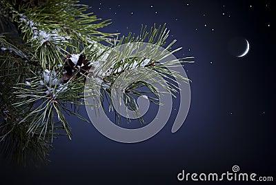 Art Christmas night
