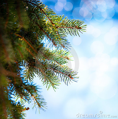 Art Christmas tree branch on a blue background
