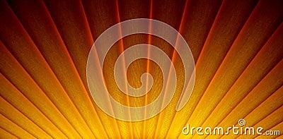 Art deco sunrise sunburst design
