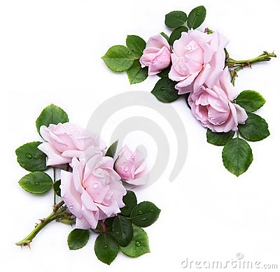 Free Art Floral Element For Design Royalty Free Stock Photo - 19979335