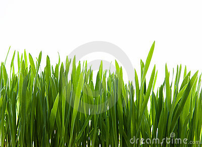 Art  green grass on white background