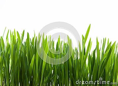 Art  green grass on white background