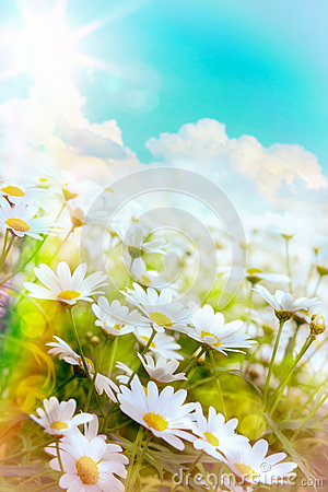 Free Art High Light Summer Flowers Natural Background Royalty Free Stock Images - 41847739