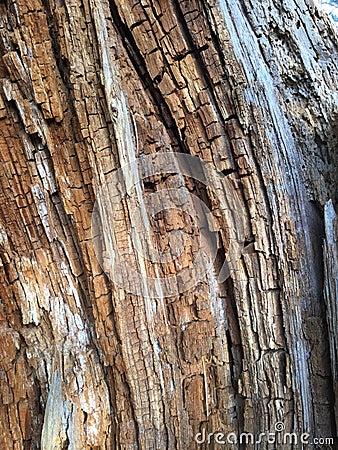 Art Of Nature Stock Photo Image 55725856