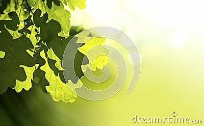 Art oak