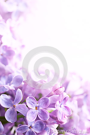 Free Art Spring Lilac Abstract Background Stock Photo - 24682550