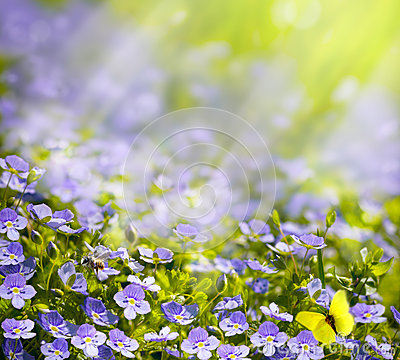 Free Art Spring Wild Flowers In The Sunlight Background Royalty Free Stock Image - 29644846